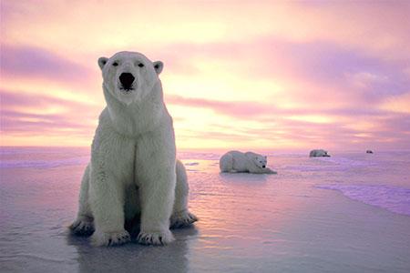 """Triển lãm """"Bắc Cực gần gũi"""" của Canada tại Hà Nội"""